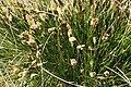 Grassbüschel 1.jpg