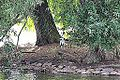 Grey heron (9785275923).jpg