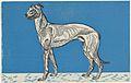 Greyhound MET DP844722.jpg