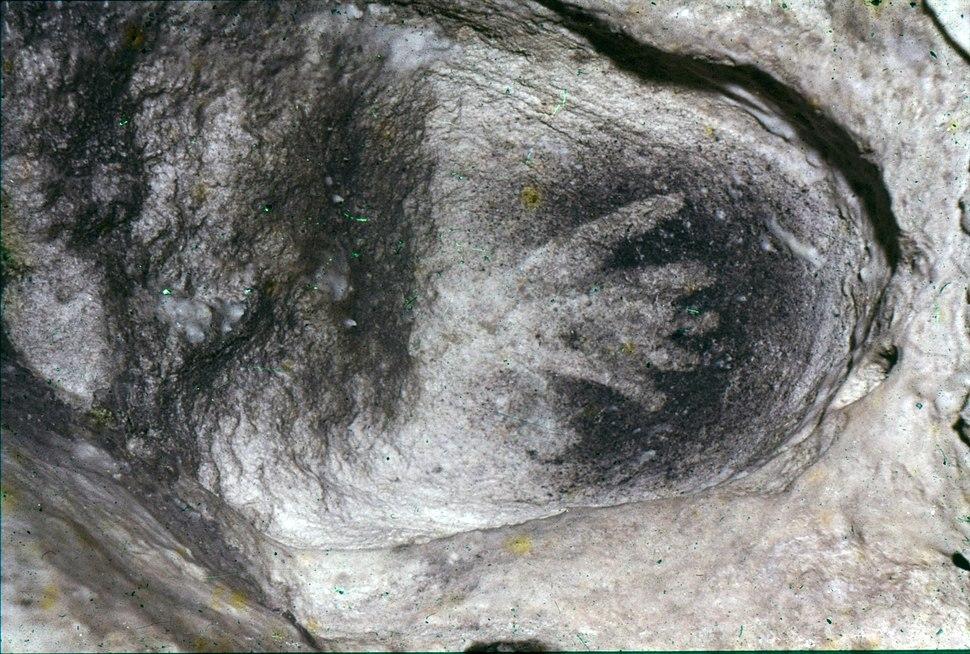 Grotte d'Aurignac-Main en réserve-1962