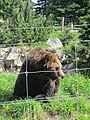 Grouse Mountain, British Columbia (2013) - 23.JPG