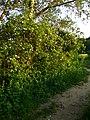 Gryshko Botanical Garden (May 2019) 07.jpg