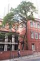HK Mid-levels 般咸道 Bonham Road 英皇書院 King's College Nov 2017 IX1 無花果 tree Fig 05.jpg