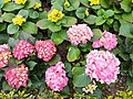 HK TST 尖沙咀 Tsim Sha Tsui 九龍公園 Kowloon Park flora n green leaves February 2020 SS2 12.jpg