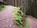 Hairpin Bend on Forest Path, Gleann Cia-Aig - geograph.org.uk - 200773.jpg