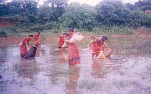 Hajong people - Hajong women fishing with 'Jakha' a traditional fishing implement
