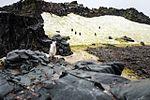 Half Moon Island, Antarctica. (24940493645).jpg