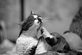 Happy grooming (8981490839).jpg