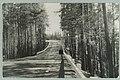 Harjutie, Nervanderin kumpu, Runebergin kumpu, W. Forss 1950s PK0169.jpg