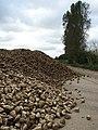 Harvested sugar beet on field platform near Owls' Grove - geograph.org.uk - 566261.jpg