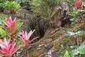 Hawaii Lava Tree State Park SAC19.JPG