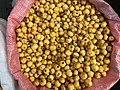Hawthorn fruits, Malatya 03.jpg