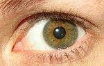 Hazel eye.jpg