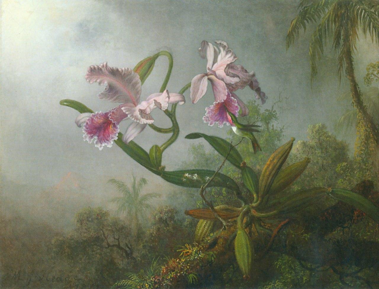 Хид orchid-hummingbird.jpg