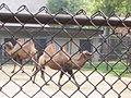Henry Vilas Zoo IMG 2373.jpg