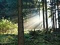 Herbst im Teutoburger Wald 04.jpg