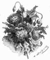 Hetzel Magasin1903 d446 Monographies végétales 9.png