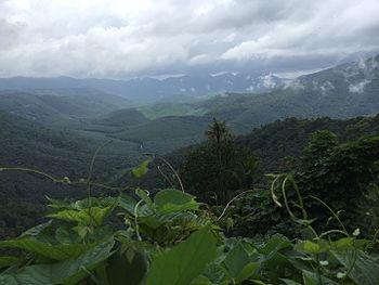 Hills of Idukki.jpg