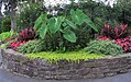Hillwood Gardens in July (19613986790).jpg