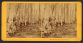 Holiday in the sugar orchard, by Kilburn Brothers.png