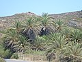 Holidays - Crete - panoramio (125).jpg