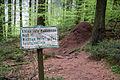 Horn-Bad Meinberg - 2014-05-02 - Velmerstot, Waldameisen (3).jpg