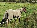 Horse, A553, Meols.JPG