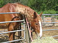 Horse (4159156375).jpg
