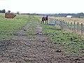 Horse in field at Leamside - geograph.org.uk - 351811.jpg