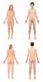 Human Body 02.png