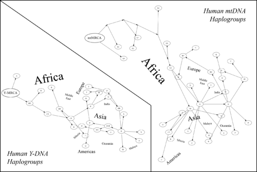Dna Originates In Africa