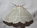IKAl 20100808 SchmetterlingB.jpg