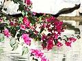 IMG 1152 Flowers.jpg