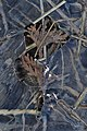 Ice on the Banks of the Grand River - Kitchener, Ontario 01.jpg