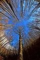 Il monte Polveracchio in dicembre con l'azzurro del cielo.jpg