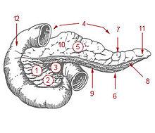 رسم البنكرياس