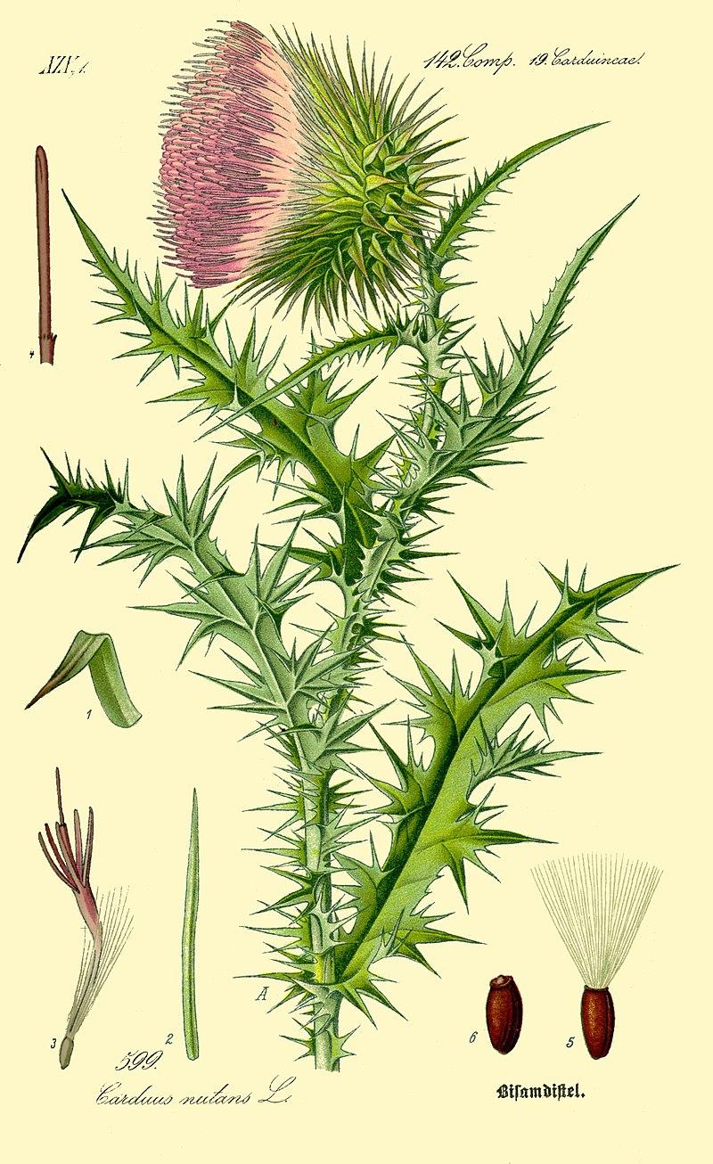 Chwasty - Siewki czy rośliny dorosłe