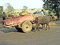 India-6329 - Flickr - archer10 (Dennis).jpg