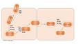 Infecció de Listeria monocytogenes en cèl·lules no fagocítiques.png