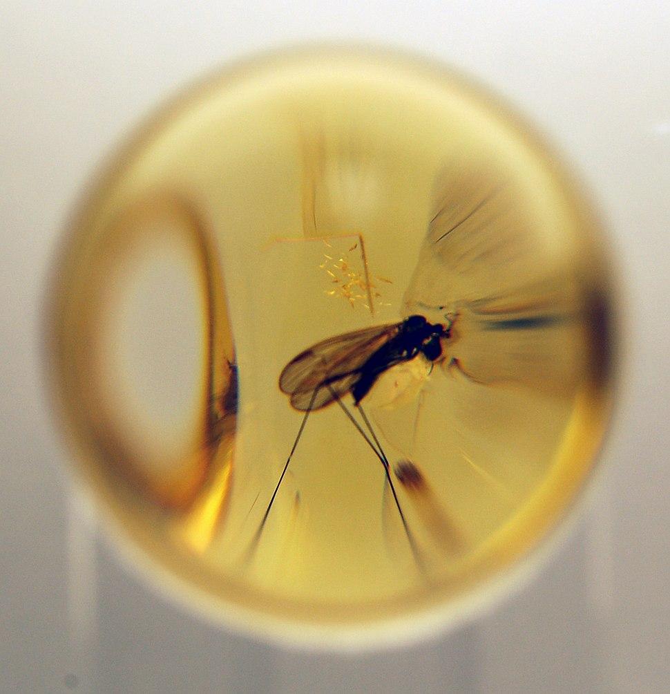 Insekt im Bernstein 2