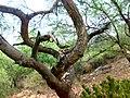 JNU Tree.jpg