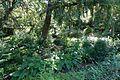 Jardin Alpin @ Jardin des Plantes @ Paris (27933432420).jpg