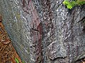 Jaspilite banded iron formation (Soudan Iron-Formation, Neoarchean, ~2.69 Ga; Rt. 169 roadcut between Soudan & Robinson, Minnesota, USA) 3 (19034577962).jpg