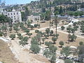 Jerusalem, Mount of olives 3859.JPG