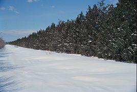 Juniperus scopulorum habitat.jpg