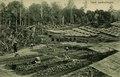 KITLV - 1405747 - Kleingrothe, C.J. - Medan - Tobacco seed beds in Deli - 1905-1930.tif