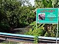 Kali teba 160131-0529 rwg.JPG