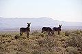 Karoo National Park 2014 26.jpg
