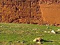 Kasbasch de Debdou 77.jpg