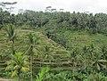 Kedisan, Tegallalang, Gianyar, Bali, Indonesia - panoramio (1).jpg